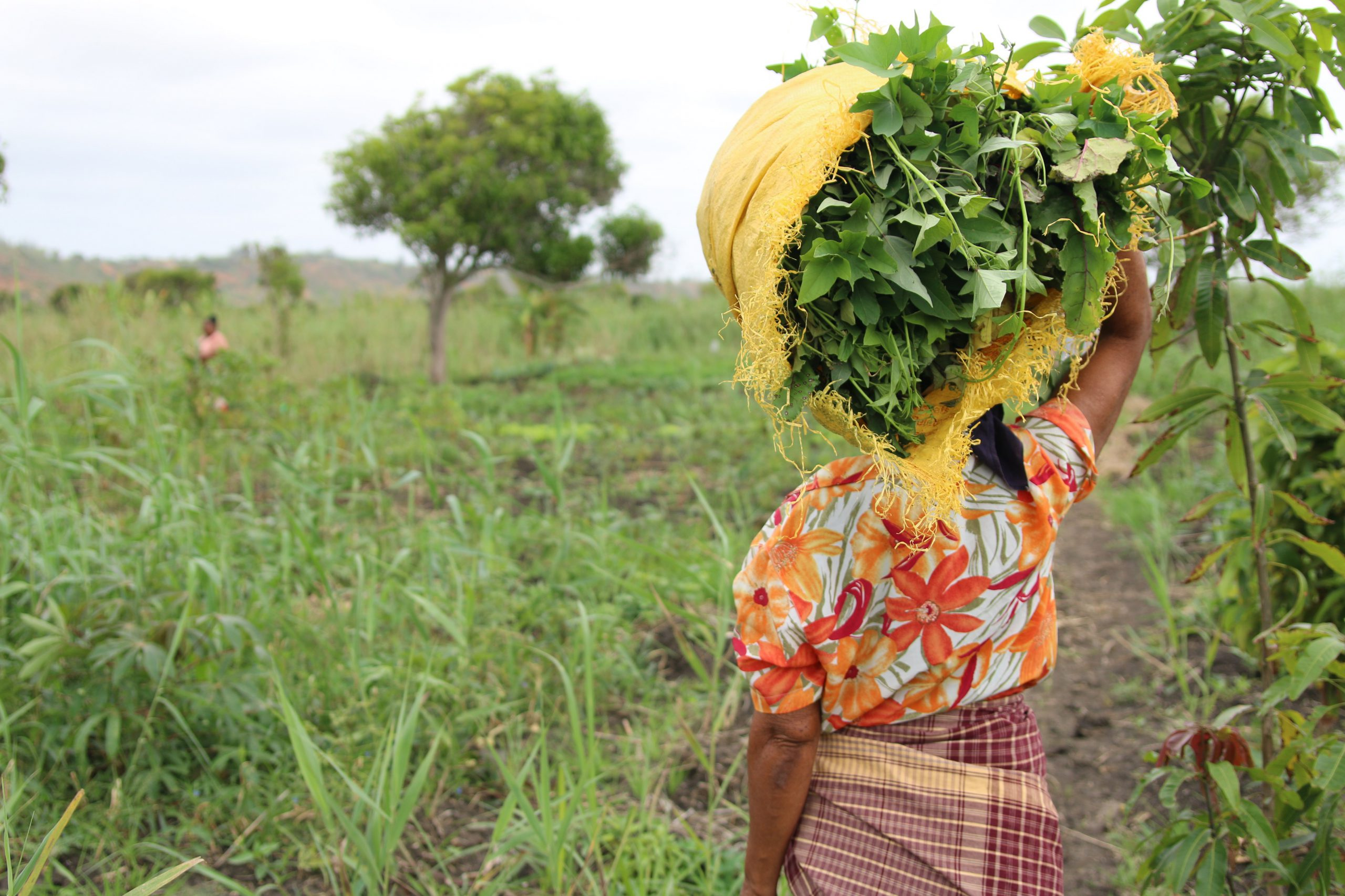 Fortalecer as capacidades na província de Inhambane para promover a justiça de gênero