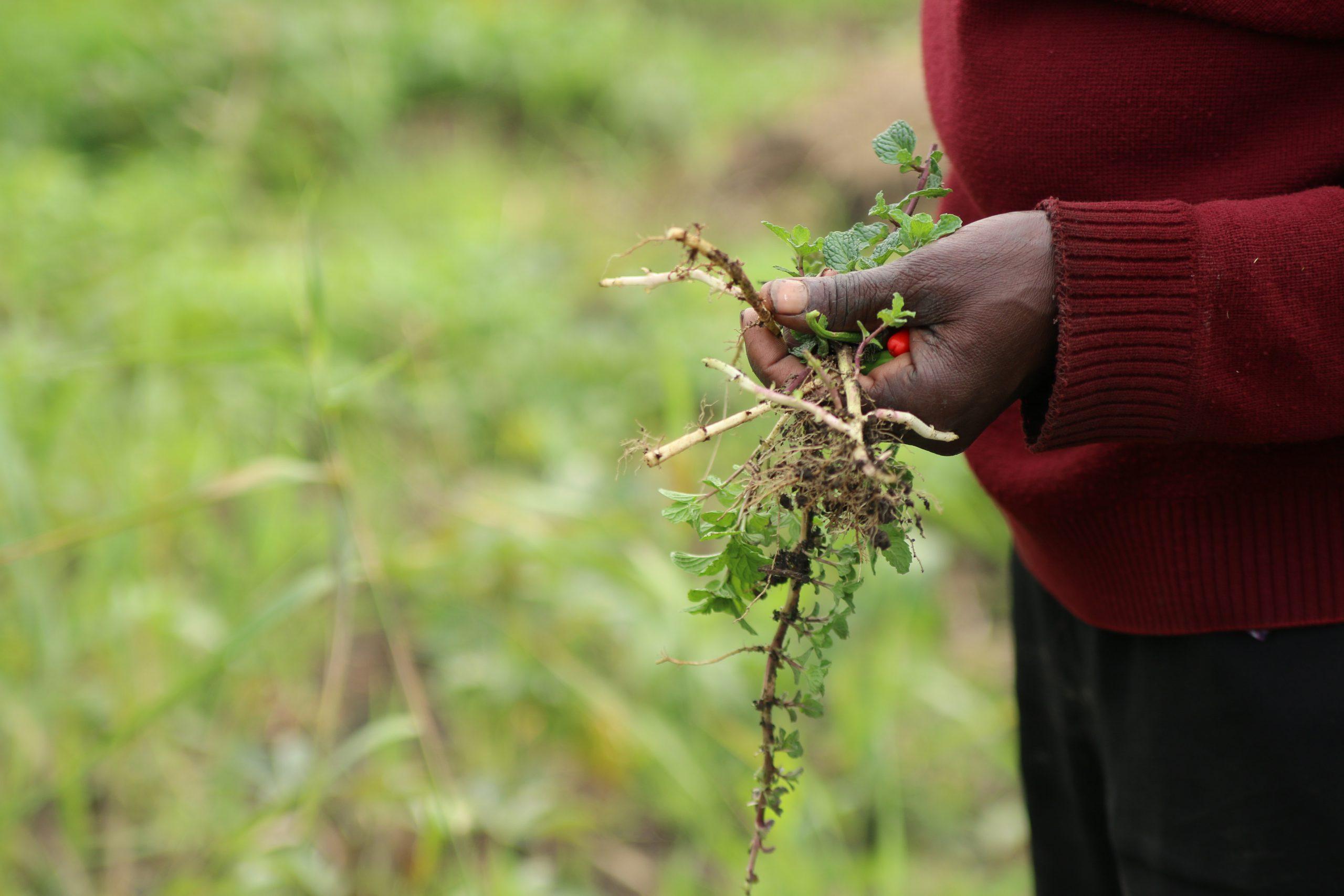 Formação em Agroecologia à Associações de Camponeses