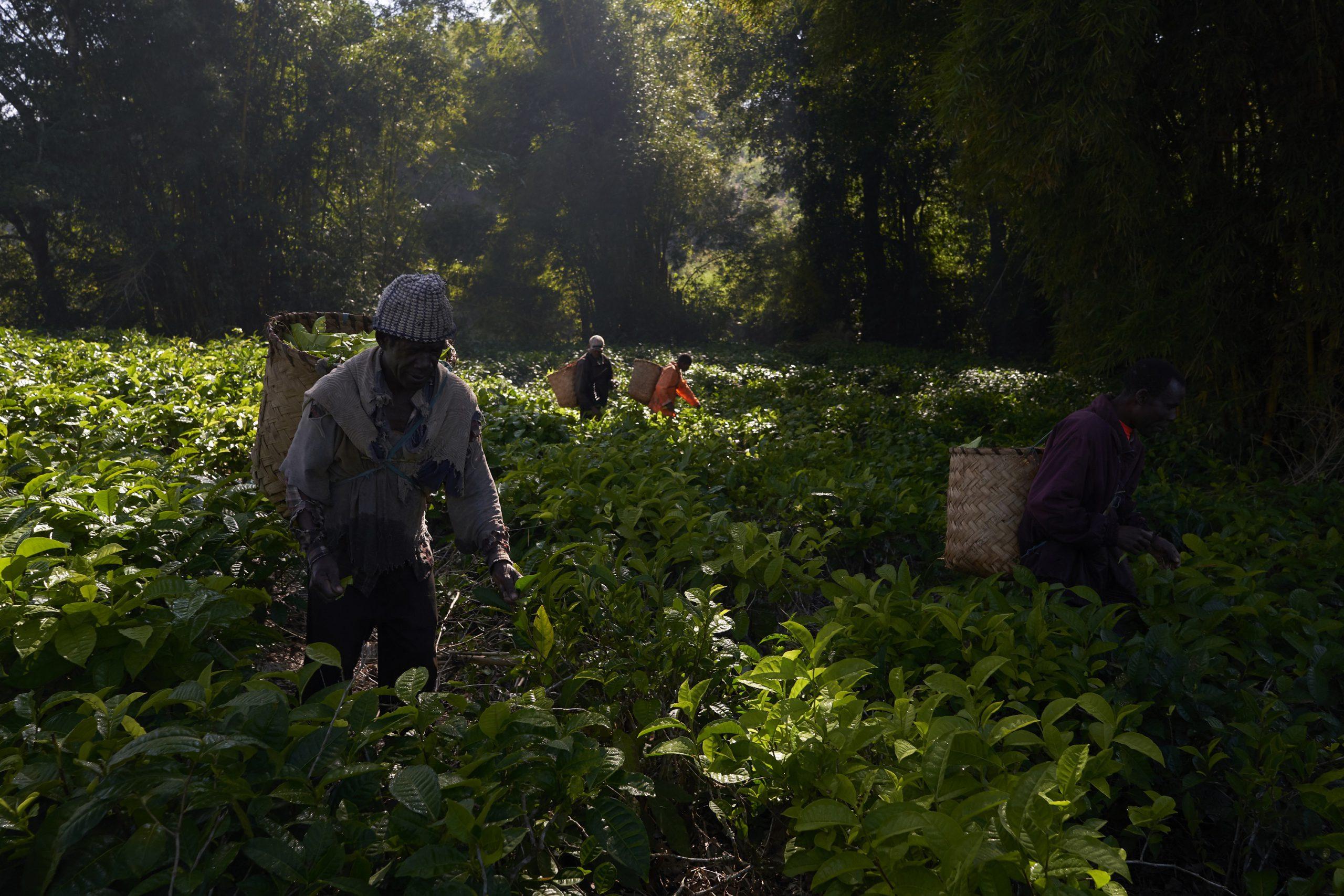 Promoção da Soberania Alimentar para as famílias Camponesas em Moçambique através de resgate, multiplicação e distribuição  de sementes locais