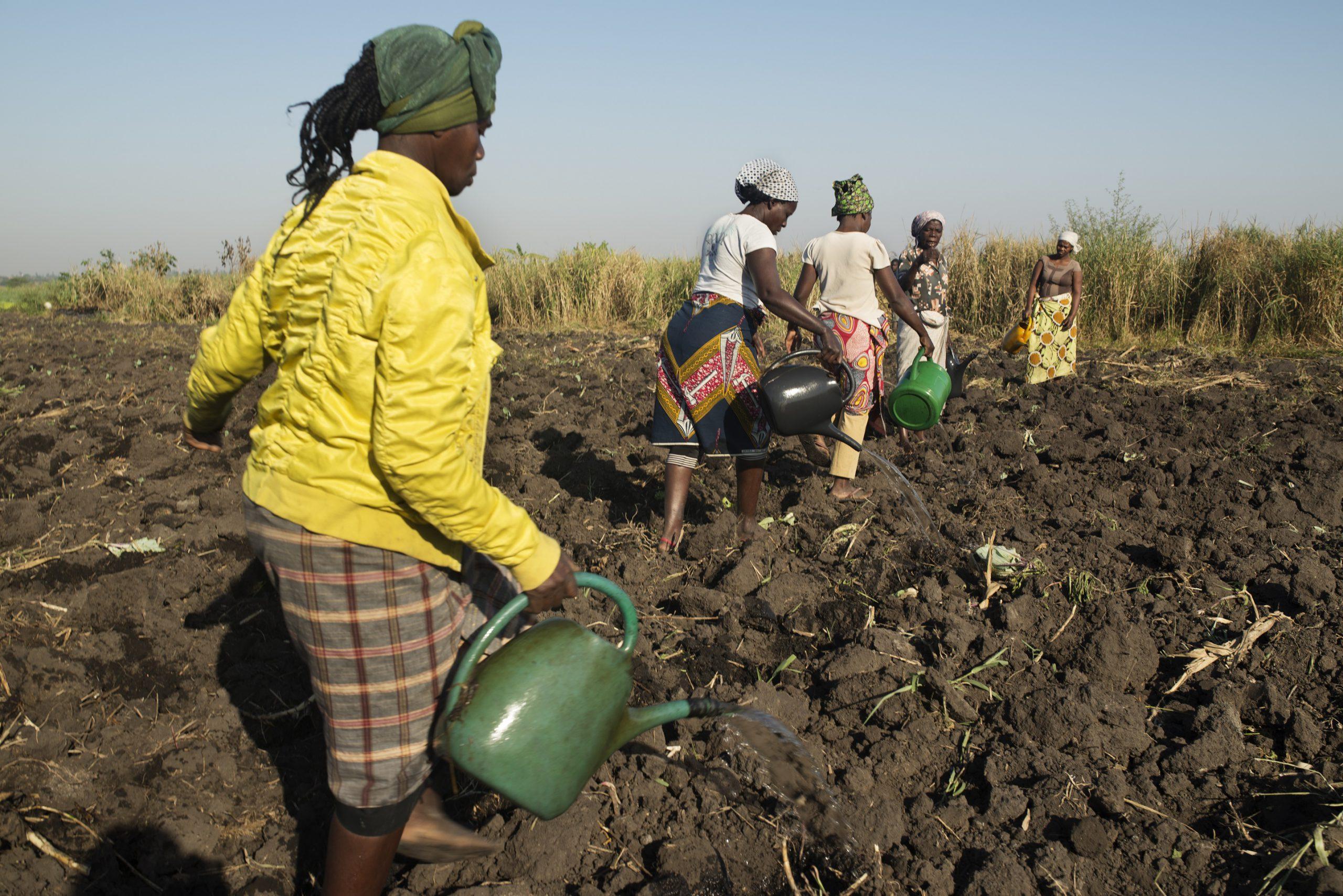 Combater a desnutrição crónica na província de Maputo